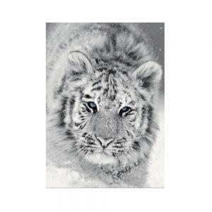 plaid tigre bianca in alta definizione Panthera di Maison Sucrée